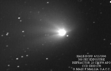 halea-1.jpg