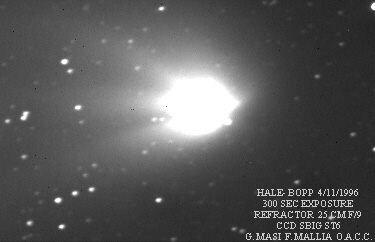 halec-1.jpg